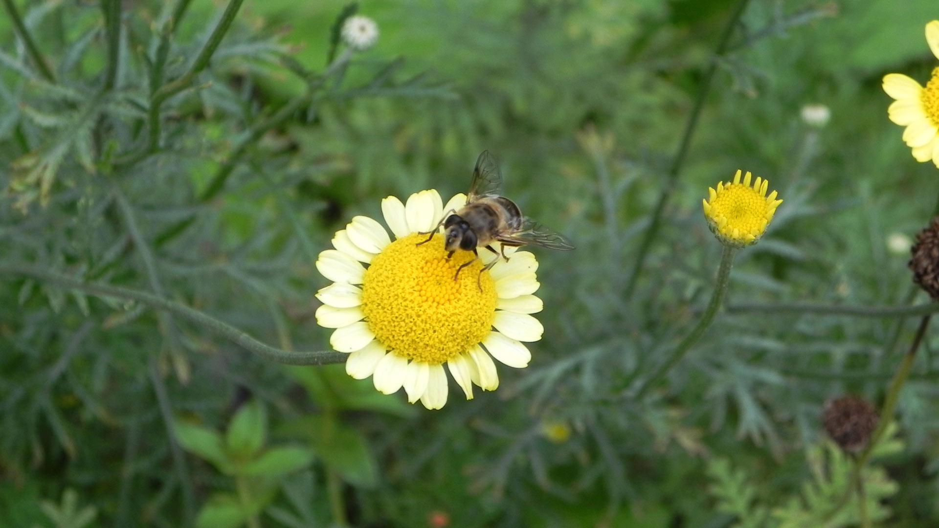 Bijtjes en bloempjes